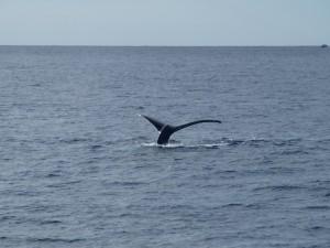 whale-04
