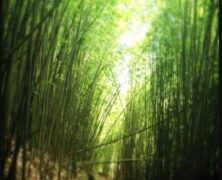 10 Signs the Bamboo Forest Isn't for You (Maui Now)